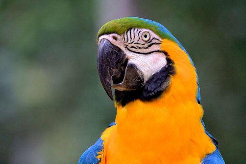 Brasil – Informació turística i guia de Brasil