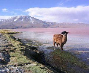 Bolívia – Informació turística i guia de viatge de Bolívia
