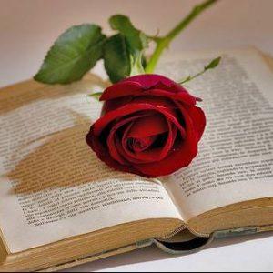 23 d'abril – Sant Jordi – La Festa del Llibre i la Rosa