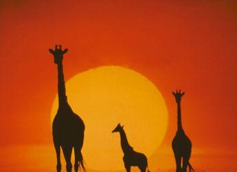 KENYA, la espectacular esencia de África bien vale un viaje / Kenya, l'espectacular essencia d'Àfrica es mereix un viatge