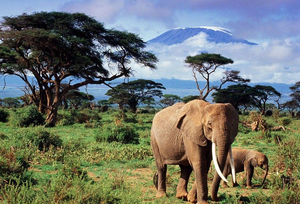 Disfruta del clima de Sudáfrica, los animales y los increibles paisajes